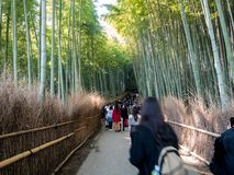 Tourist walking in Bamboo Forest stock photography