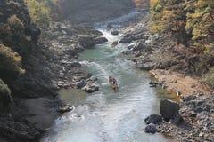 Arashiyama, Japan on the Katsura River during the autumn season Stock Photo