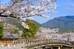Arashiyama Kyoto i vår Royaltyfri Fotografi