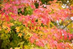 Arashiyama, Kyoto, Japón Foto de archivo libre de regalías