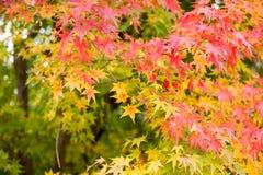 Arashiyama, Kyoto, Japón Fotografía de archivo libre de regalías