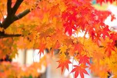 Arashiyama, Kyoto, Japón Fotos de archivo libres de regalías