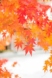 Arashiyama, Kyoto, Japón Fotografía de archivo