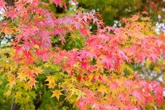 Arashiyama, Kyoto, Japón Foto de archivo