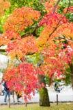 Arashiyama, Kyoto, Japón Imagenes de archivo