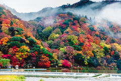 Arashiyama Kyoto, Japan Fotografering för Bildbyråer