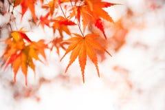 Arashiyama, Kyoto, Japan Lizenzfreies Stockfoto