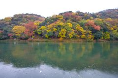 Arashiyama Kyoto Japan during autumn. A rainy day at the Arashiyama area in Kyoto, Japan on November 2015 Royalty Free Stock Photos