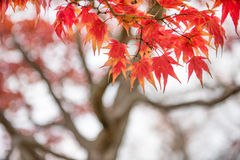 Arashiyama, Kyoto, Japan Stock Image