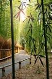 Arashiyama, la foresta di bambù con il percorso Fotografia Stock Libera da Diritti