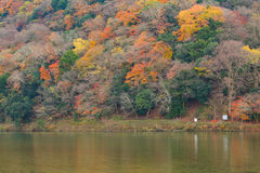 Arashiyama mountain during Autumn season Royalty Free Stock Photos