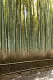Arashiyama mountain Kyoto Japan famous landmark for tourist with bamboo forest.  Royalty Free Stock Photos