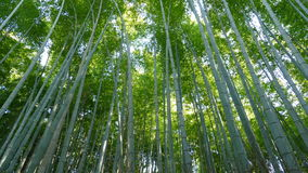 Arashiyama mountain Kyoto Japan famous landmark for tourist with Stock Photos