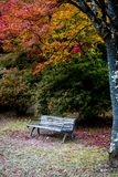 Arashiyama park in autumn season. The landscape with a empty seat at Arashiyama park, one of landmark in Kyoto, Japan. The tourists prefer to visit the beauty of Royalty Free Stock Image