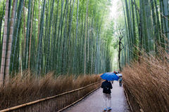 Arashiyama on a rainy day. Arashiyama on a rainy heavy day Royalty Free Stock Photography
