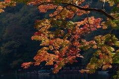 Arashiyama sightseeing Royalty Free Stock Image