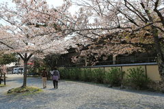 Arashiyama in spring. At japan Royalty Free Stock Photography