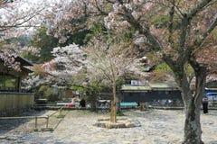 Arashiyama in spring. At japan Royalty Free Stock Image