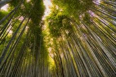 Arashiyama Zen time royalty free stock photos
