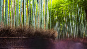 Arashiyma bamboo grove, Kyoto Stock Photo