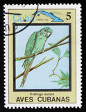 Aratinga euops, `en för fåglar för serie` den kubanska, circa 1983 Arkivfoton