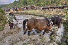 Aratore che ara il giacimento del riso, facendo uso del potere dei cavalli, villaggi vicini Fotografie Stock Libere da Diritti