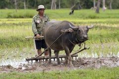 Aratro con il bufalo di acqua Fotografie Stock