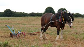Aratro d'agricoltura d'annata. Fotografia Stock Libera da Diritti