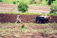 Aratro etiopico Fotografie Stock