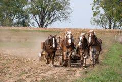 Aratura degli agricoltori di Amish Fotografie Stock