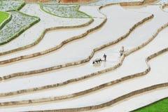 Aratura dei campi con i plws ed i bufali tradizionali Fotografia Stock Libera da Diritti
