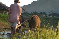 Aratura dei terrazzi del riso di Bali, l'Indonesia Immagini Stock