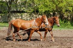 Aratura del campo con i cavalli Fotografie Stock Libere da Diritti