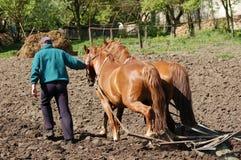 Aratura del campo con i cavalli immagini stock libere da diritti
