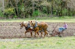 aratura del campo con i cavalli e un vecchio aratro Fotografia Stock Libera da Diritti