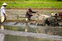 Aratura del giacimento del riso Immagine Stock Libera da Diritti