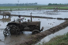 aratura della terra di agricoltura con i manzi ed il trattore Fotografia Stock Libera da Diritti