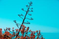 Araucana αροκαριών ενάντια στο μπλε ουρανό Στοκ φωτογραφίες με δικαίωμα ελεύθερης χρήσης