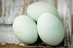 Araucana blue chicken eggs. On white surface Stock Photography