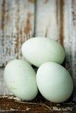Araucana blue chicken eggs. On white surface Royalty Free Stock Photos