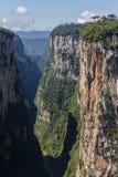 Araucaria angustifolia at Itaimbezinho Canyon Stock Photos