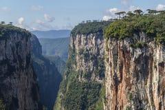 Araucaria angustifolia at Itaimbezinho Canyon Stock Photo