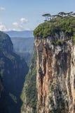 Araucaria angustifolia at Itaimbezinho Canyon Stock Photography