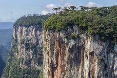 Araucaria angustifolia at Itaimbezinho Canyon Stock Image