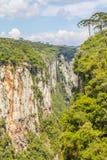 Araucaria angustifolia at Itaimbezinho Canyon Royalty Free Stock Image