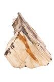 Araucaria en pierre d'arbre Photo stock