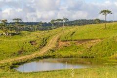 Araucaria in a farm field and small lake. Farm with Araucaria angustifolia Forest in Cambara do Sul, Rio Grande do Sul, Brazil Royalty Free Stock Photos