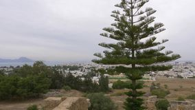 Araucaria trees on background city and sea panorama from above Carthage Tunisia. Araucaria trees on background city and sea panorama from above ruined historical stock video footage