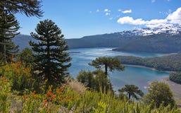 Araucarias tegen de achtergrond van het meer en de bergen met sneeuw wordt behandeld die Royalty-vrije Stock Foto's