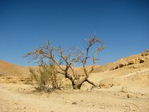 Arava desert. The Arava desert, different colored sand and stones. Eilat mountains.Israel Stock Image